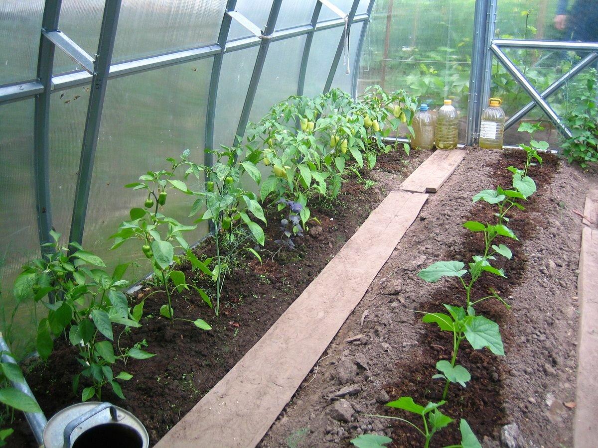 Для удобства рекомендуется разделить теплицу на несколько участков, на каждом из которых будет расти определенное растение