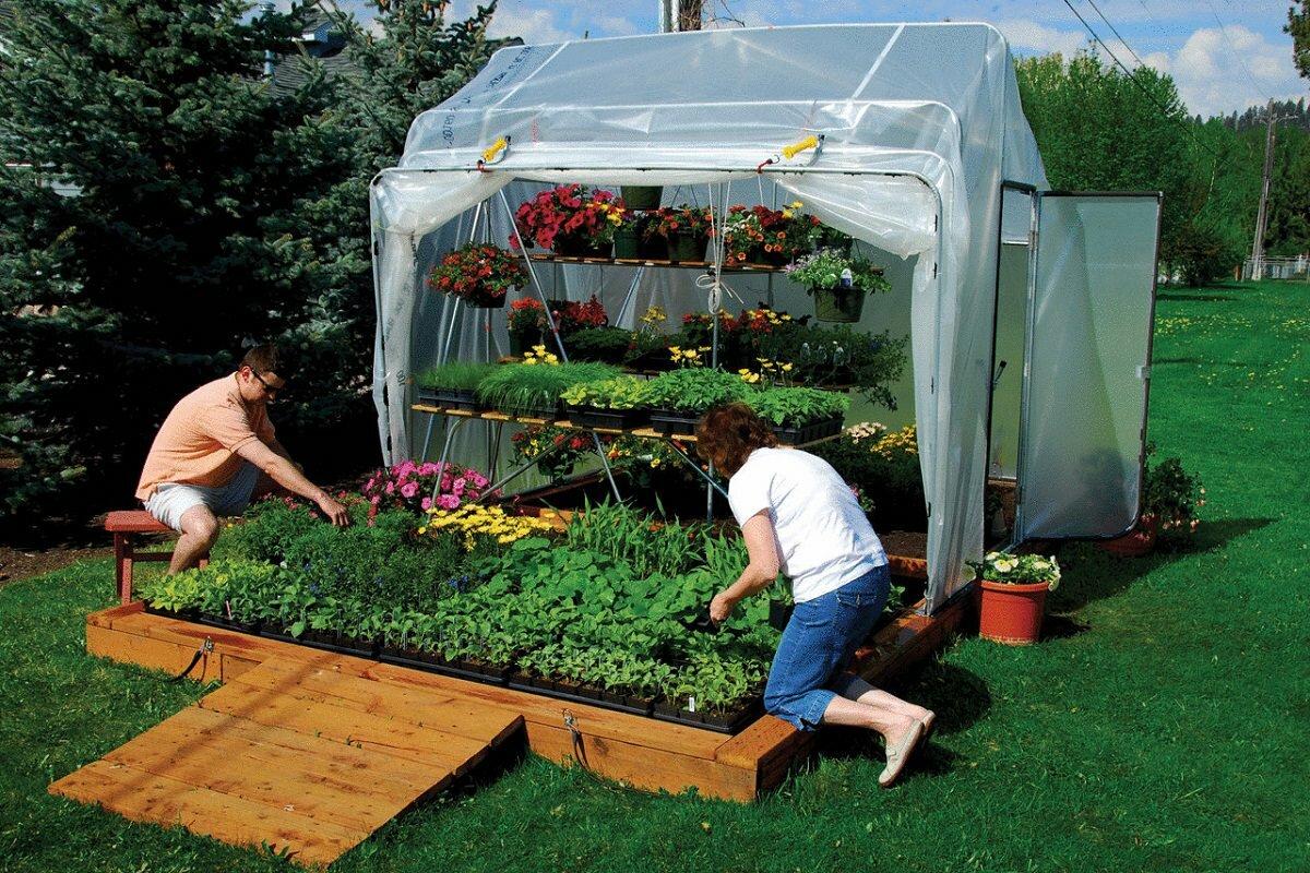 При выращивании зелени в парнике нужно выполнять регулярные проветривания и поддерживать оптимальный температурный режим