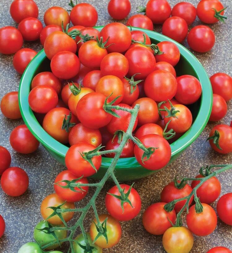 Помидоры Карамель красная - высокоурожайный сорт томатов
