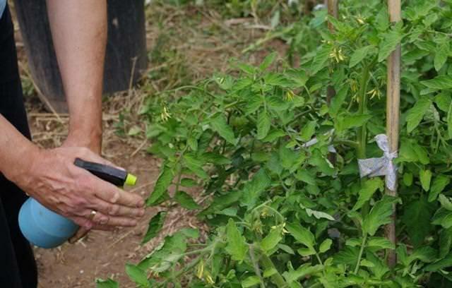 Обработка почвы медным купоросом осенью