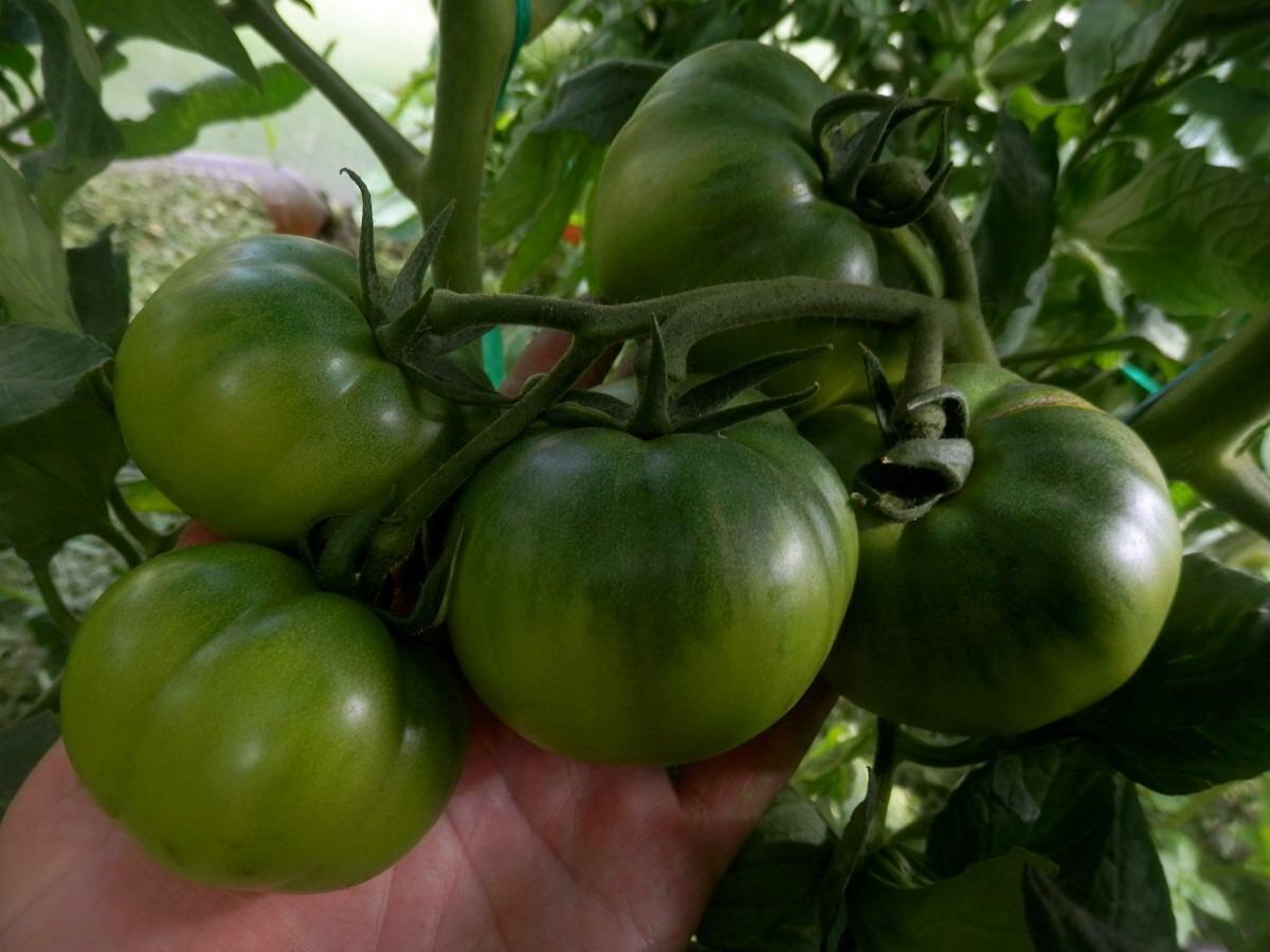 томат клубничное дерево отзывы фото урожайность конструктором