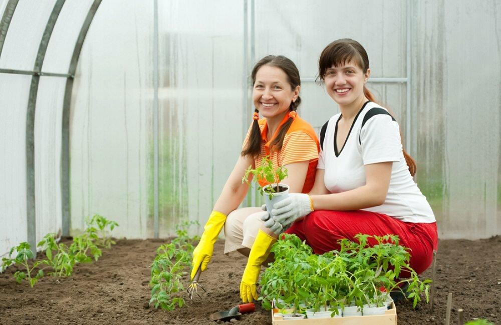Перед высадкой рассады в теплицу нужно подготовить почву и приобрести удобрения