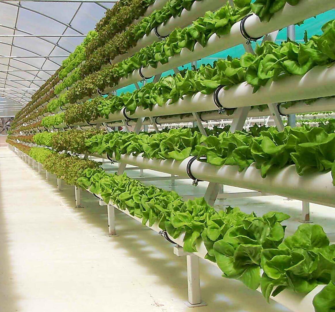 бизнес на зелени в теплице форум