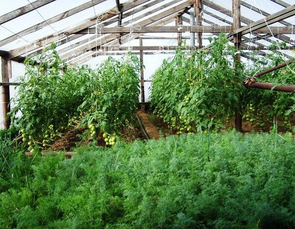 Занимаясь высаживанием растений в зимний период, необходимо заранее подготовить теплицу