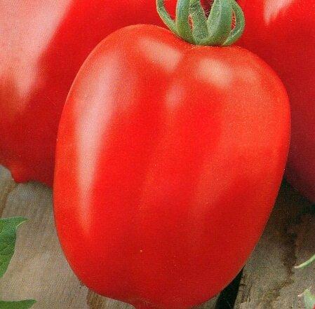 Отличительной чертой томатов Новичок является их продолговатая форма