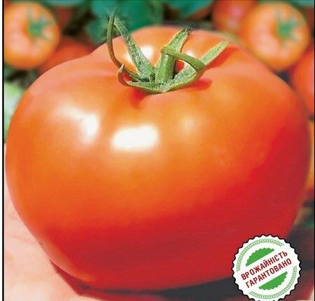 Семена томатов Бобкат можно приобрести в магазине для овощеводства, супермаркете или интернете