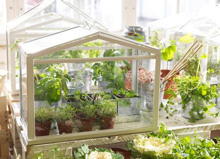 Балконные парники отлично подходят для выращивания небольшого количества овощей дома