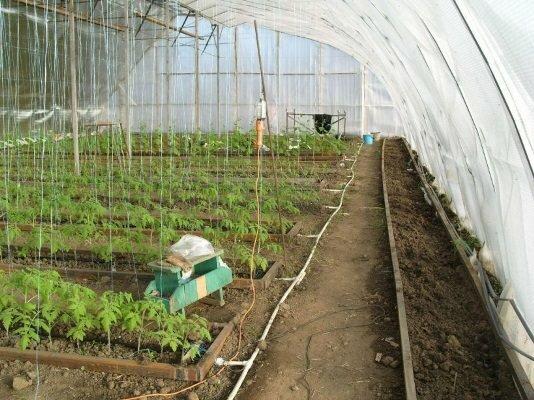 Одним из главных условий выращивания урожая является правильный обогрев грунта в теплице