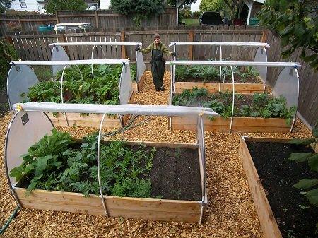 Мини-теплицы прекрасно подходят для выращивания овощей для собственного употребления