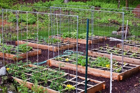 Шпалеры для помидор можно применять как в теплице, так и на открытом воздухе