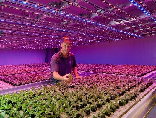 При обустройстве теплицы особое внимание огородники рекомендуют уделять выбору осветительных приборов