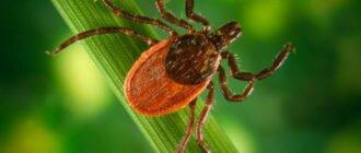 Дачные опасности: как защитить себя от ядовитых растений, жалящих насекомых и прочих неприятностей на дачном участке?
